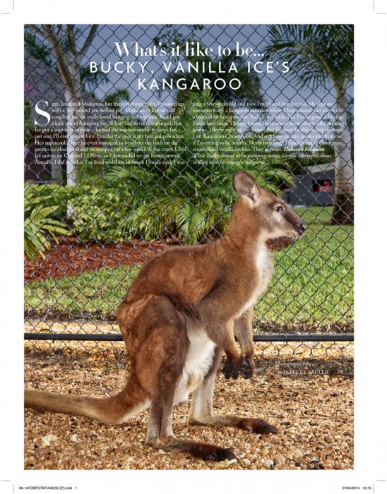 Bucky the Kangaroo | Miami based photographer Jeffery Salter